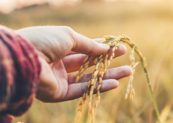 Эффективное сельское хозяйство