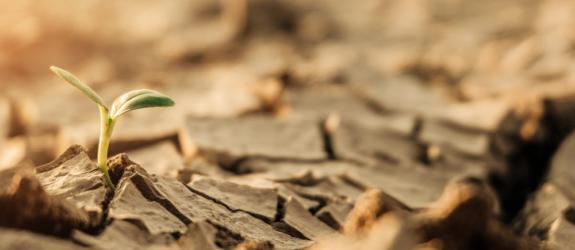 Противодействие изменению климата